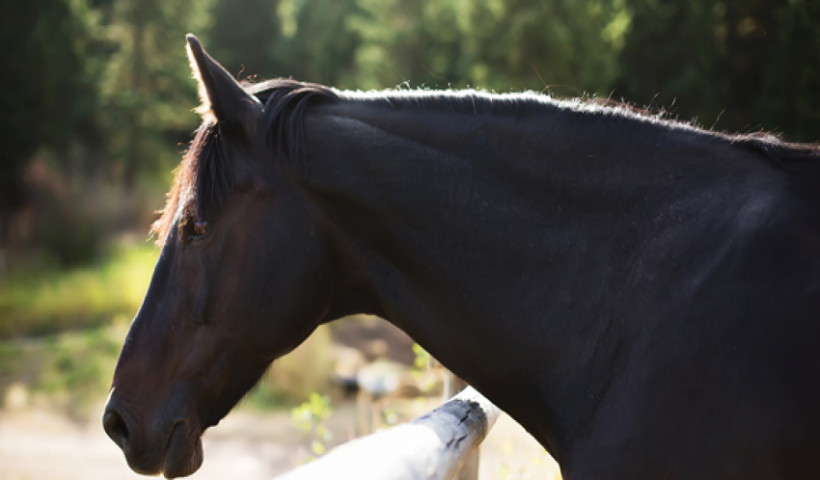 All You Need To Know About Horse Brain